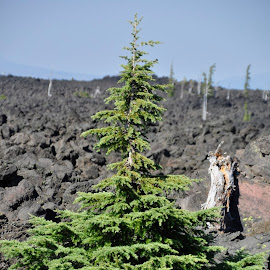 Lava Fields in the Wallamette Forest Oregon USA by Jacquie Wooten - Landscapes Caves & Formations (  )