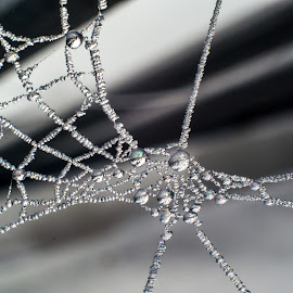 Foggy Day Web by Adele Southall - Nature Up Close Webs (  )