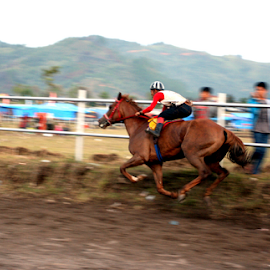horse race by Wanhar Wanhar - News & Events Sports ( aceh, indonesia, horse, takengon, gayo, race )