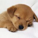 Cute dog Puppy Wallpaper HD mobile app icon