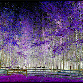 Purple Forest by Mina Thompson - Abstract Light Painting ( fence, oregon, manipulations, nature, purple, forest )