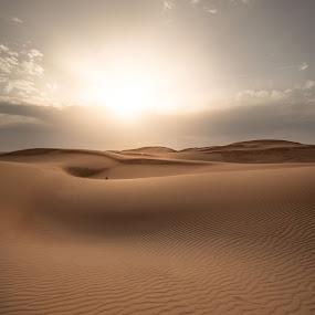 Desert  by Walid Ahmad - Landscapes Deserts ( arab, uae, landscape, nikon, photography )