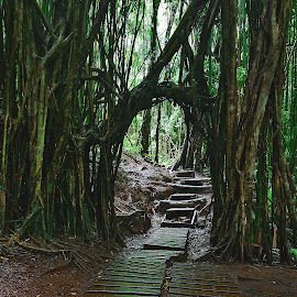 Entryway to the Enchanted Rain Forest by Patrick Flood - Landscapes Forests ( canon, photosbyflood, jungle, paradise valley, enchanted rain forest, rain forest, hawaii, oahu, manoa falls, manoa )