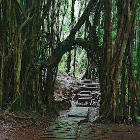 Entryway to the Enchanted Rain Forest by Patrick Flood - Landscapes Forests ( canon, photosbyflood, paradise valley, jungle, enchanted rain forest, rain forest, oahu, hawaii, manoa, manoa falls )