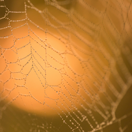 Wire by Ovidiu Caragea - Abstract Macro ( autumn, color, drops, light, spider web,  )