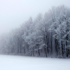 Beyond the woods by Gayathri Hegde - Landscapes Weather