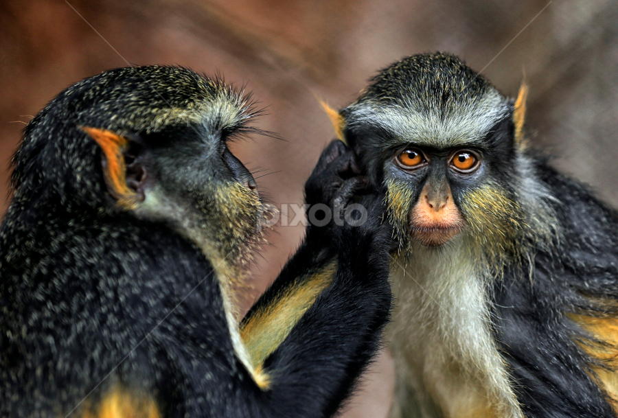 by Agoes Santoso - Animals Other Mammals