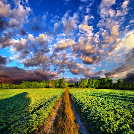 I Will Be There by Phil Koch - Landscapes Prairies, Meadows & Fields ( vertical, photograph, farmland, yellow, leaves, love, sky, nature, tree, autumn, trail, orange, twilight, agriculture, horizon, portrait, dawn, environment, serene, trees, floral, wisconsin, natural light, road, phil koch, spring, photography, sun, farm, path, horizons, clouds, office, park, green, scenic, morning, farming, shadows, field, red, blue, sunset, fall, peace, meadow, summer, sunrise, earth, landscapes )