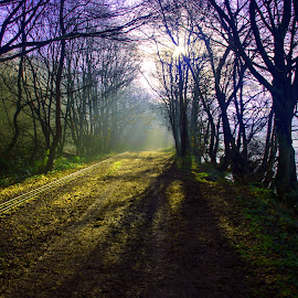 On the way by Sharon Goodall - Landscapes Forests ( rudyard nikon colour sunlight )