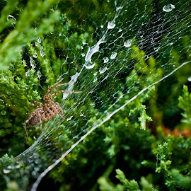 by Eduard Andrica - Nature Up Close Webs