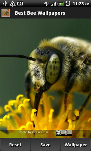 免費個人化App|Best Bee Wallpapers|阿達玩APP