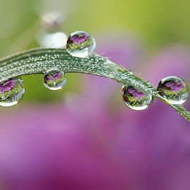 As beautiful as your smile by Citra Hernadi - Nature Up Close Natural Waterdrops
