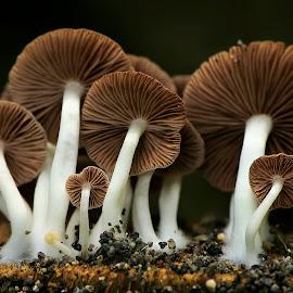 jamuuure by Wartono Kumpulono - Nature Up Close Mushrooms & Fungi