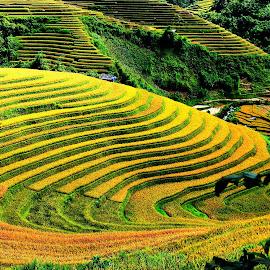 by Hong Huy Phuong - Landscapes Travel