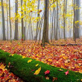 Fall color by Jim Harmer - Landscapes Forests ( landscape )