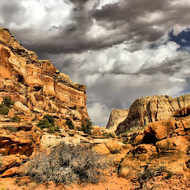 Capital Reef by Tina Wiley - Landscapes Deserts ( hiking trail, desert, pathway, rocky, cliff, navajo sandstone, sandstone, red rocks, colorado plateau, landscape, hiking, bluff, backpacking, climbing, wilderness, nature, mesa, utah, camping, trail, capital reef national park, box canyons, rugged )