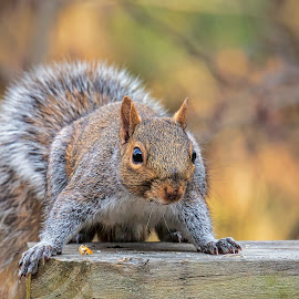 I See You by Carol Plummer - Animals Other Mammals ( squirrel, animal )