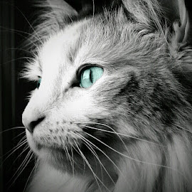 by Levi Farr - Animals - Cats Portraits (  )
