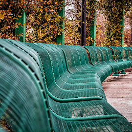 Curved Bench by Carol Plummer - City,  Street & Park  City Parks (  )