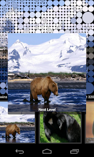 Guess Bears Pictures - screenshot