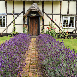 Lavender To The Door  by Graham Mulrooney - Buildings & Architecture Homes ( structure, uk, building, doorway, brick, oxfordshire, door, house, lavender, rustic, england, wood framed.old, horizontal, stratford on avon, path, flowers, english, easton )