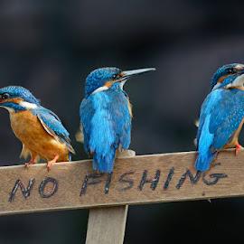 no fishing please  by Raj Dhage - Animals Birds