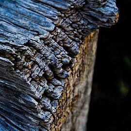 wood up close by Magdalena Wysoczanska - Abstract Macro