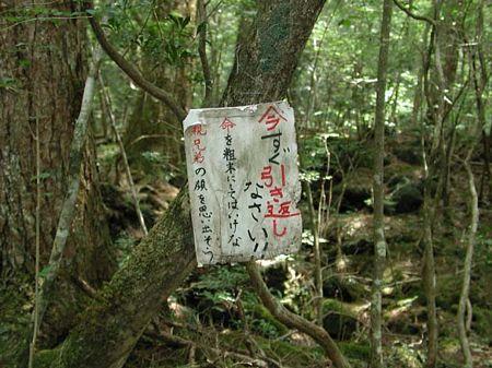 樹海 富士山