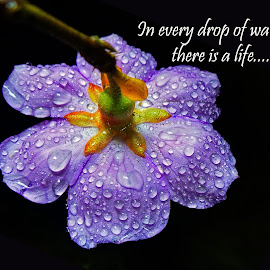 waterdrop by Asif Bora - Typography Quotes & Sentences (  )