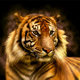 by Tatang Kuswandi - Animals Lions, Tigers & Big Cats