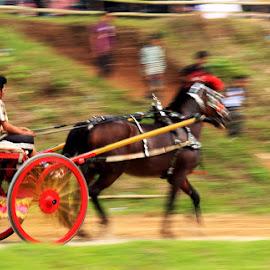 Pacu Kudo, Kab. Tanah Datar - West of Sumatera by Fajar Kurniawan - News & Events World Events ( indonesia, event, kamerafajar, visitindonesia, culture )