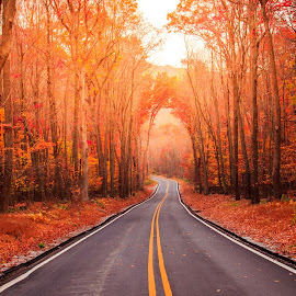 Another Autumn Drive by Mike Martin - Landscapes Travel ( canon, orange, road, leaves, morning, red, autumn, color, drive, fall, nj, mike martin, mist )