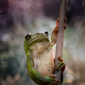 fitnes by Alonk's Roby - Animals Amphibians