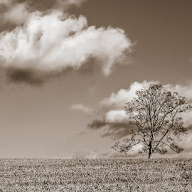 by Nic Evennett - Landscapes Cloud Formations