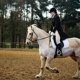 Equestrian by Nikki Wilson - Sports & Fitness Other Sports ( rider, dressage, horse, show, equestrian,  )