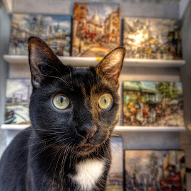 Cat in a Window by Ben Hodges - Animals - Cats Portraits ( pose, paris, cat, window, hdr, montmartre, france )