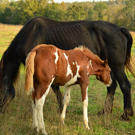 dinner time by Edie Obryant - Animals Horses