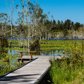 Cattai Wetlands by Kerry Williams - Landscapes Waterscapes ( cattai wetlands, wetland, australia, wooden walkway, nsw, jetty, coopernook, elevated walkway, kwill photography, swamp )