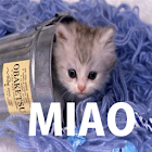 Meow Cats Free icon