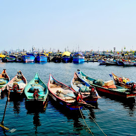 Lined by Silver Stalin - Landscapes Waterscapes ( fishing boats, fish, boats, sea, india, kasimedu, landscape, chennai, tamil nadu )