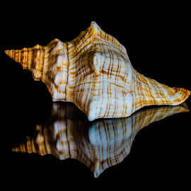 by Joseph Martinez - Artistic Objects Other Objects ( shell, sea shell, reflection, d5200, reflections, nikon )