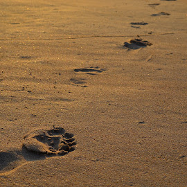 Foot Steps by Sujal Kumar Malik - Nature Up Close Sand