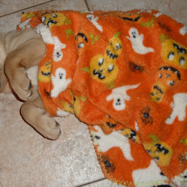 by Donna Sepe - Animals - Dogs Puppies ( puppy, ghost, labrador, dog, halloween,  )