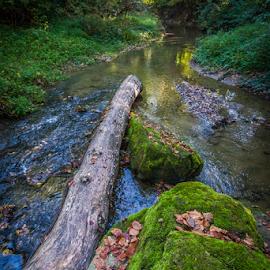 by Dalibor Điri - Landscapes Forests