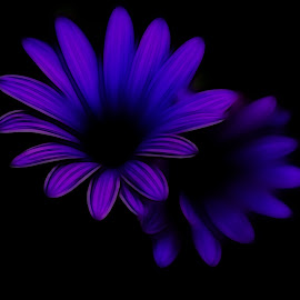 Blue by Stefania Loriga - Abstract Light Painting ( blue, dark, pink, black, flower )