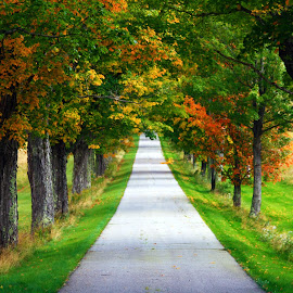 A road less traveled by Benjamin Tucker - Landscapes Prairies, Meadows & Fields ( new england, foliage, trees, road, new hampshire )
