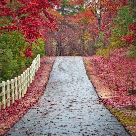 RIver Road by Lou Plummer - Transportation Roads ( walking, park, autumn, fall, fayetteville, hiking )