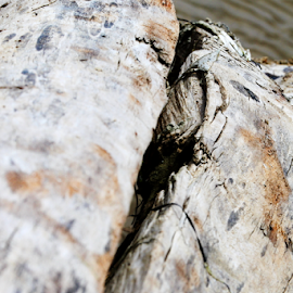 Driftwood by Henrik Lehnerer - Abstract Macro ( shore, detail, old, wood, beach, drift, waterworn, coast, weathered, debris, driftwood, tree, nature, grey, closeup, abstract, sand, structure, stump, worn, texture, eroded, gray, woods, log, coastal, bleached, environment, trunk, wooden, driftwoods, grain, brown, lines, natural, decay )