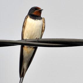 Vestitoare by Kati Raileanu - Animals Birds