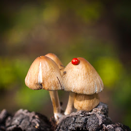mushrooms # 1 by Djordjina Ciric - Nature Up Close Mushrooms & Fungi ( green, beige, ladybug, yellow, bokeh, mushrooms )